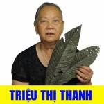 Triệu Thị Thanh Profile Picture