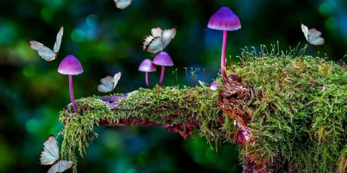 The full guide to how magic mushrooms work